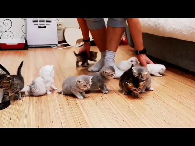Дечко против 10 мали мачиња