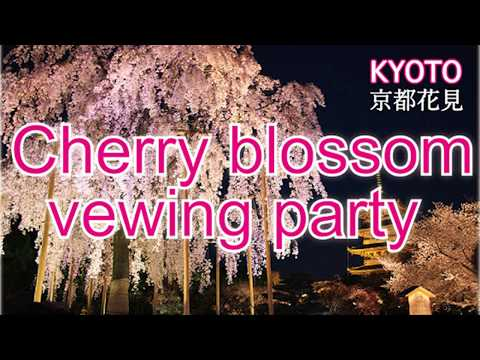 Kyoto Sakura report at night