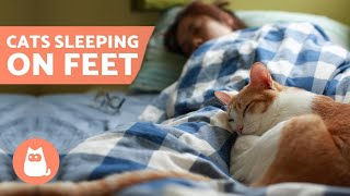 Why Does My CAT SLEEP on My FEET?  5 Reasons!