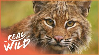 America's Favourite Wild Animals (Wildlife Documentary) | Wild America | Real Wild