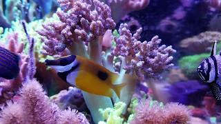 Channel Appetizer | Ep.5 | MikeC's 140 Gallon Softie Reef Tank