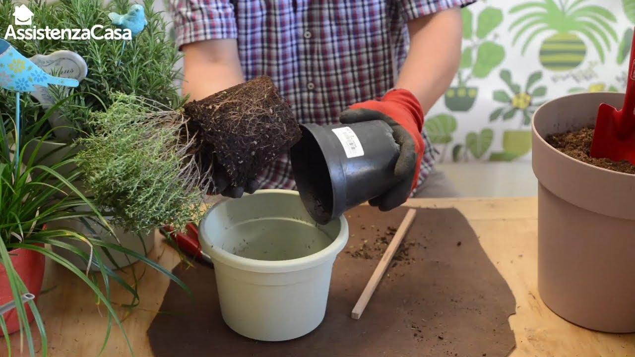 Coltivare In Casa Piante Aromatiche come coltivare le piante aromatiche – i tutorial assistenza casa e  casafacile