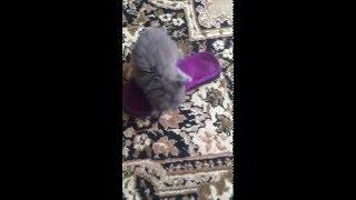 Котёнок и тапок игры маленького Кузи