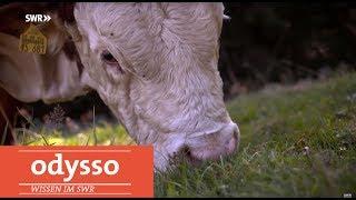 Neue Betäubungsmethoden für Tiere gesucht | Odysso