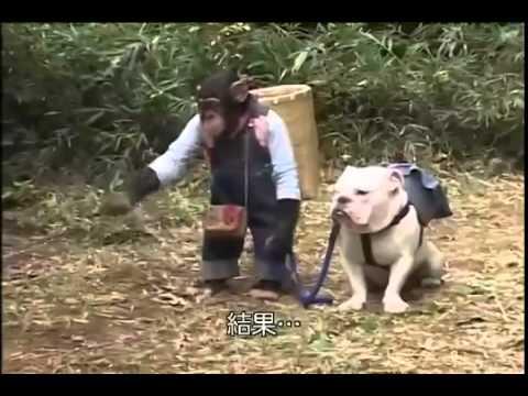 Sevimli Köpek ve Akıllı Maymun Bölüm 5