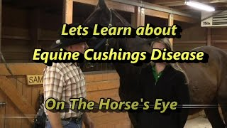 Learn to recognize Cushings Disease, The Horses Eye Presents Recognizing Equine Cushings symptoms