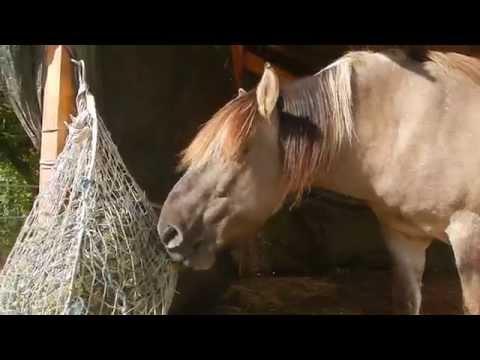 Bild: OffenstallTV - Filme über Pferde Aktivställe, Laufställe und Bewegungsställe
