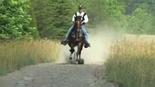 Repeat youtube video Reverand Homer - Single Footer Stallion