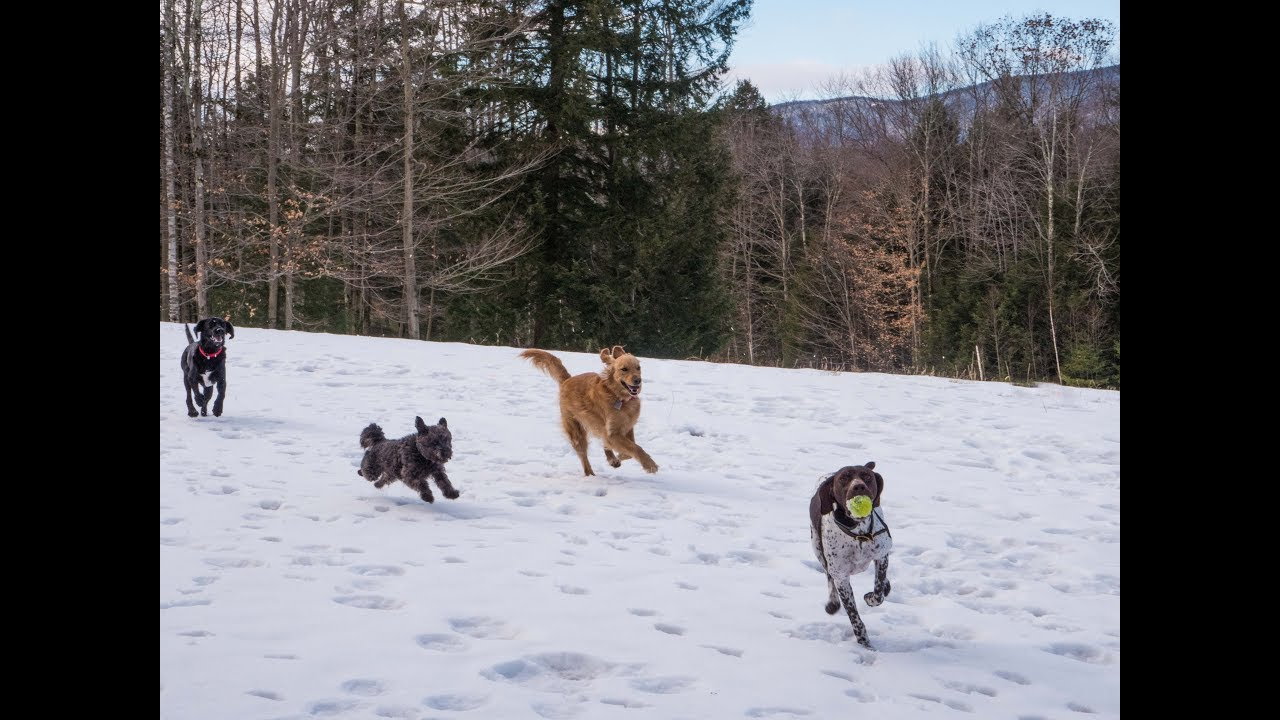 ORVIS Presents: Working Dogs
