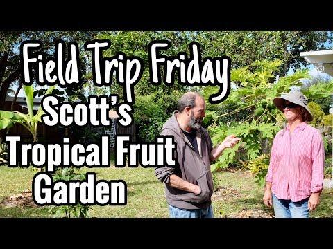 Field Trip Friday- Scott's South Florida Tropical Fruit Garden