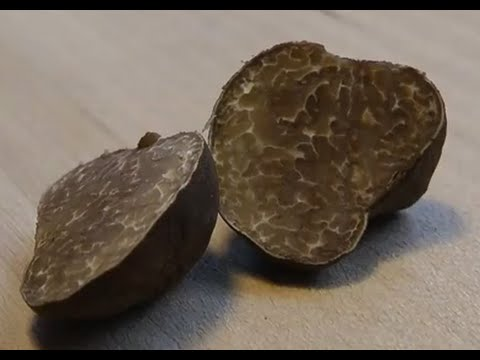 Truffles & Silver found with the Garrett Euro ace 350 / Metal detecting # 002