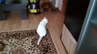 Кот Кузя вытирает жепку об ковер