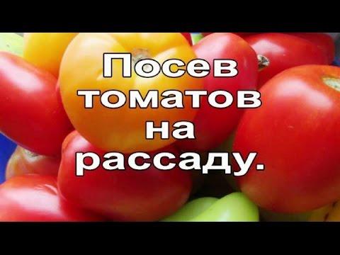 Самые лучшие сорта томатов для открытого грунта и все о них