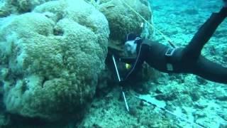 魚突き体験の様子やイメージ動画を載せています。 ◎魚突きの事について...