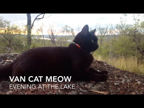 VanCatMeow An evening at the lake - traveling Australia cat off grid living tiny house camper van