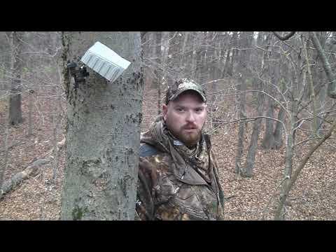 241 7/8 Inch Free Range Illinois Whitetail Archery Hunt