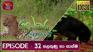 Sobadhara - Sri Lanka Wildlife Documentary | 2019-11-01 | ( සලකුණු සහ සාක්ෂි  ) Signs and Evidence Thumbnail
