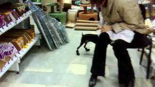 Собака примеряет сапоги.mp4