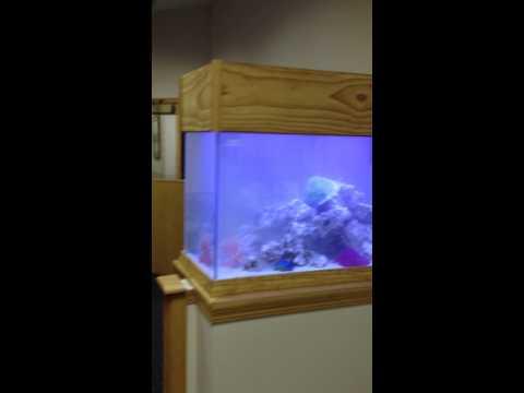 Custom Aquarium Install (Something Fishy Inc.)