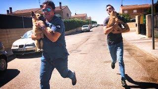 liberamos-a-dos-perritos-apaleados-y-salimos-corriendo-con-ellos