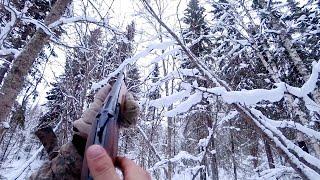 Охота на рябчика с подхода зимой