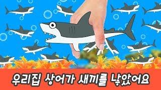 한국어ㅣ우리집 상어가 새끼를 낳았어요. 어린이 동물만화, 해양동물 외우기, 컬렉타ㅣ꼬꼬스토이