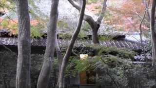 祇王寺 その3 草庵 京都の紅葉名所 Giou-ji Temple autumn leaves attractions in Kyoto part.3 高岡智照 検索動画 2