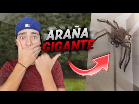 Download ENCONTRE una ARAÑA GIGANTE!!! en mi PATIO