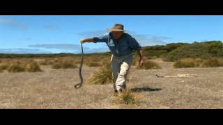 The Wildlife Man catches a deadly tiger snake with his hands