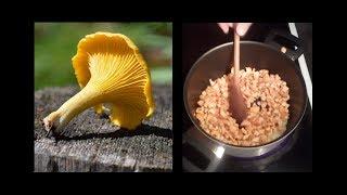 gyógyítja a rókagomba paraziták recepteit