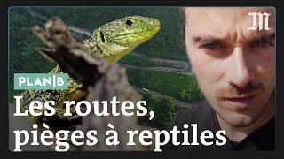 Pourquoi les routes sont des pièges à reptiles #PlanB