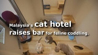 5-star cat hotel in Malaysia raises bar for feline pampering