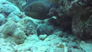 Moray Eel hunting...