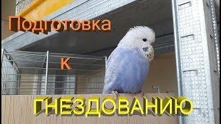Как подготовить волнистых попугаев к гнездованию