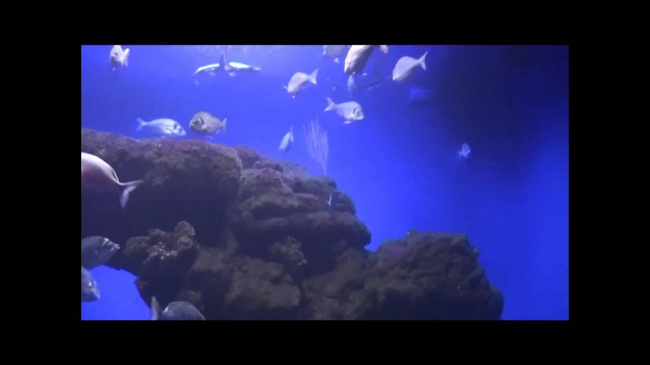 Aquarium fische unter wasser salzwasser youtube for Salzwasser aquarium