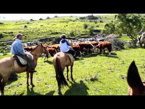Soy campesino y Qué - Musica carranguera Colombiana