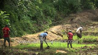 Repeat youtube video Sri Lankan farmers till thier fields, at the forest edge