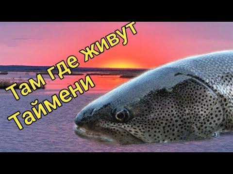 Там, где живут Таймени. Осень 2020. Подводная съемка. Сахалинская рыбалка & Sakhalin fishing