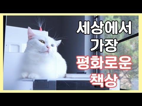 세상에서 가장 평화로운 책상 😴 고양이가 재워드립니다