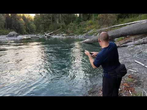 Summer Run King Salmon, Olympic National Park
