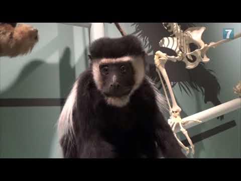 Sneak Peek: New Museum of Natural History in Tel Aviv