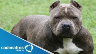 Muere niño por ataque de perros / Bebé asesinado por perro pitbull