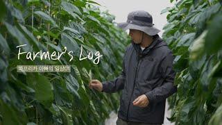 [농부 브이로그] 3000평 파프리카 스마트팜 농부의 …