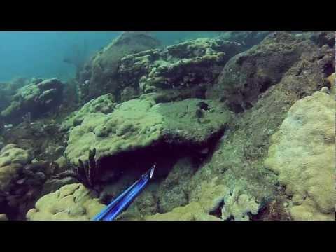 Ft Lauderdale Beach Dive July 18 2012