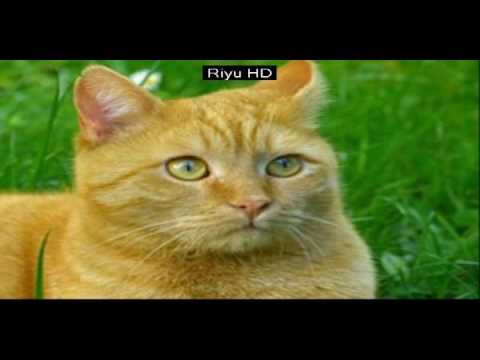 Cats are super funny creatures that make us laugh - Funny cat & kitten compilation - cute cat