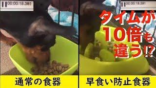 今日は犬の早食い防止をテーマにした動画やな! ミニチュアピンシャーの...