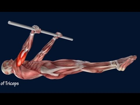 how to front lever muscle anatomy training program easyflexiiblity,