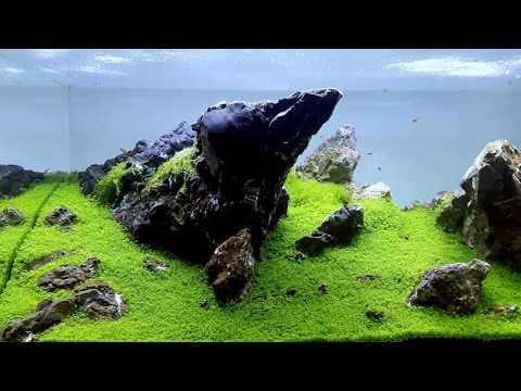 Aquarium 360 L by Aquaman Nature Studio