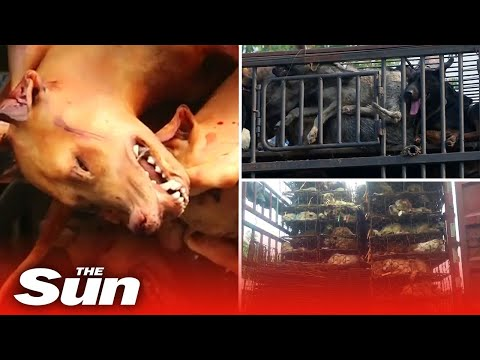 Inside China's Brutal Dog Meat Trade Where 10 Million Dogs A Year Are Killed, Cooked And Eaten