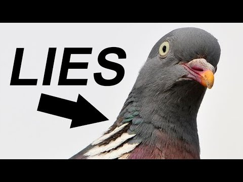BIRDS. AREN'T. REAL.